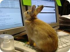rabbit staring at computer